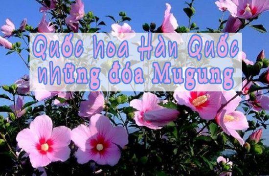 Quốc hoa Hàn Quốc những đóa Mugung