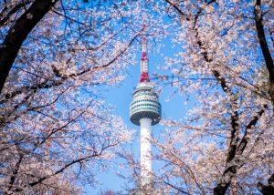Tháp Namsan mùa xuân