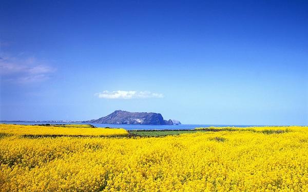 Đảo Jeju được thiên nhiên ưu đãi cho một khung trời tuyệt đẹp là nơi đón một lượng lớn du khách ghé thăm