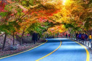 Đảo Nami mùa thu đẹp tựa nàng thơ vậy đó