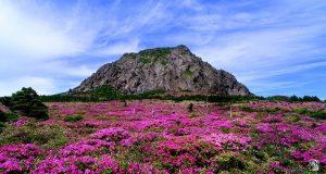 Đến đảo Jeju đừng quên chinh phục đỉnh Hallasan nhé
